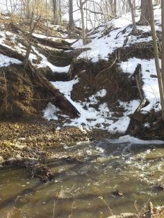 Small glen by creek